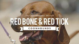 Dee Gunter is a breeder of Coonhounds. She breeds Bluetick, America...