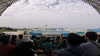 [오키나와] 츄라우미 수족관 - 오키쨩 쇼