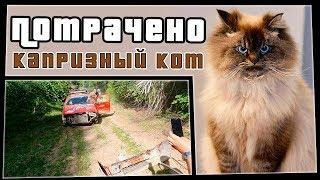 Капризный кот | ПОТРАЧЕНО