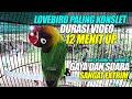 Lovebird Paling Konslet Durasi  Menit Up  Gaya Dan Suara Paling Extrim M T R Gapura Sf  Mp3 - Mp4 Download