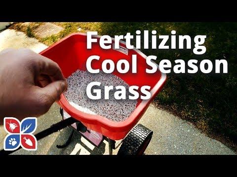 How to Fertilize Cool Season Grass - Lawn Care Tips   DoMyOwn.com