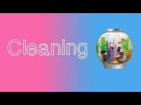 How To Clean A Fish Tank (BiOrb)