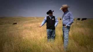 The Next Generation of American Ranching relies on Select Sires
