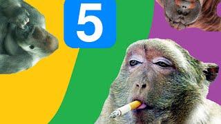 Śmieszne zwierzęta #5 - Małpy i Goryle