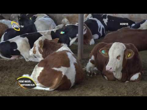 Yeni Nesil Hayvancılık-Ruminant Nedir?