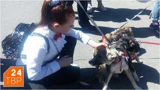 Собаки искали друзей среди людей | Новости | ТВР24 | Сергиев Посад