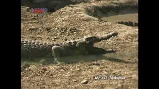 Melaka: Butterfly and Crocodile Farm