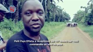 Petit Pays Effatta - réception des bœufs