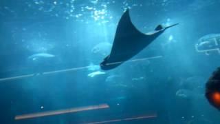 Невероятный и самый большой аквариум в Дубае. Рыбы фантастикие(Всем привет, зовут меня Жора, мне 22 и вот я уже 20 дней в Дубаи. Сейчас погода уже нормализуется потихоньку..., 2016-09-22T15:35:29.000Z)