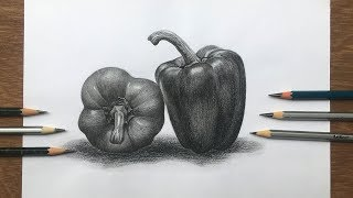 How to draw and shade a capsicum | bell pepper drawing | pencil sketch step by step
