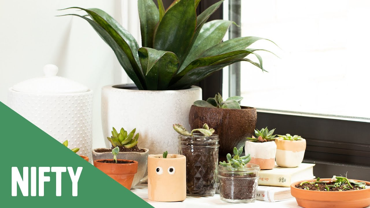 Easy Way To Grow More Succulents