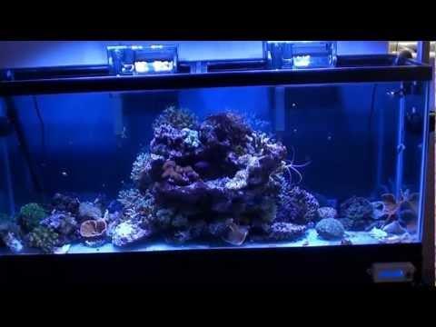 Saltwater,How to set up saltwater aquarium,Saltwater Equipment,Saltwater Coral & Reef,Saltwater Fish