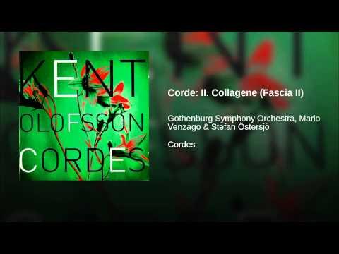 Corde: II. Collagene (Fascia II)
