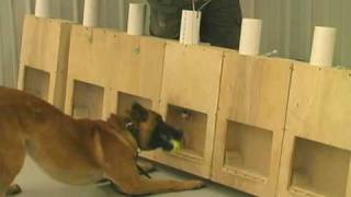 On Target- Training Substance Detector Dogs- Detection 2