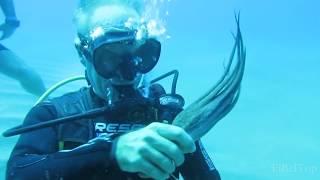 Удивительные морские животные. Подборка 2017