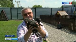 Девять поросят родилось у свинки породы мини-пиг в Барнаульском зоопарке