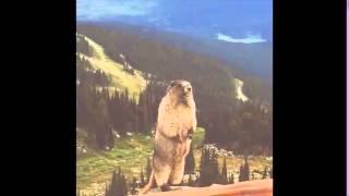 Видео на все случаи жизни(, 2016-03-14T18:07:32.000Z)