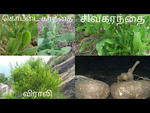 Indian Herbal Plants and It's Name | மூலிகைகளும் அதன் பெயர்களை தெரிந்துகொள்ளுங்கள்