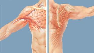 Роль плечевого пояса в формировании сколиоза. Влияние на изменения в грудной клетке и позвоночнике