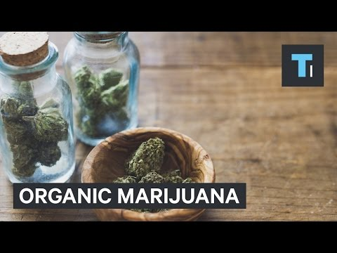 Organic marijuana movement