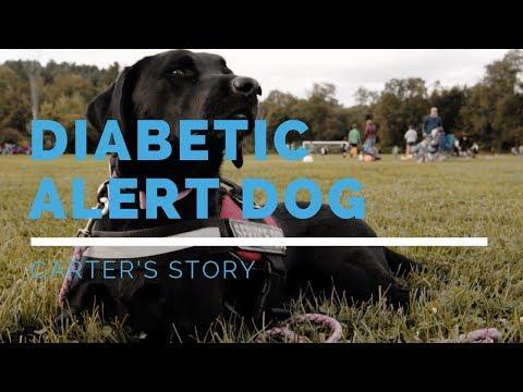 Diabetic Alert Dog Feature: Carter's Story