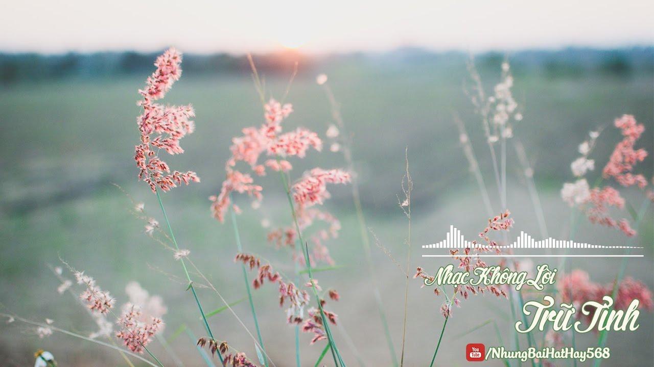 Nhạc Trữ Tình Không Lời Hay Nhất – Hòa Tấu Đàn Tranh – Liên Khúc Nhạc Không Lời Nhẹ Nhàng Thư Giãn