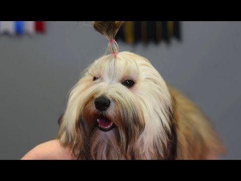 Simple Non-Poodle Topknot