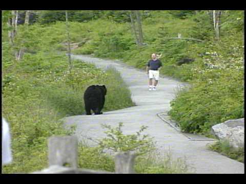 Смотреть WLOS Bear chases man at Clingman's Dome in GSMNP онлайн