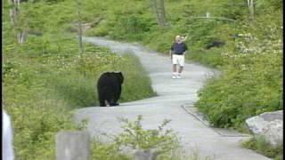 WLOS Bear chases man at Clingman