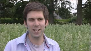 UK's first large-scale commercial quinoa harvest in Shropshire