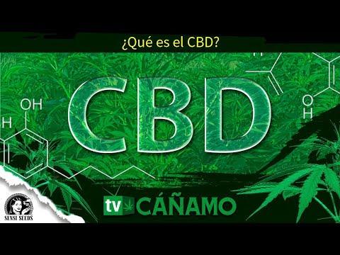 Qué es el CBD,  qué propiedades tiene y la problemática del CBD en España