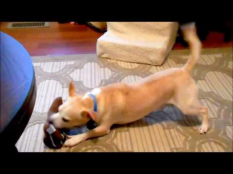 dollar-tree-dog-toy-review