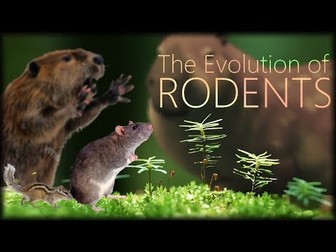 The Evolution Of Rodents 🐀