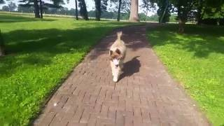 Kaos   Blind Dog Walking