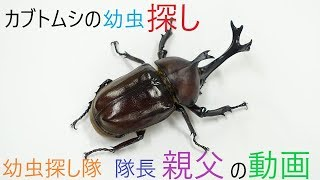 次回予告にもあった通りカブトムシの幼虫探しの動画です!!(養殖計画し...