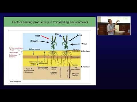 KAUST Professor Of Plant Science Mark Tester Talks About Salinity Tolerance In Crop Plants