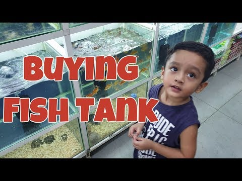Buying A Fish Tank | Fish Aquarium