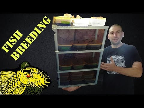 Fry Rack System: Breeding