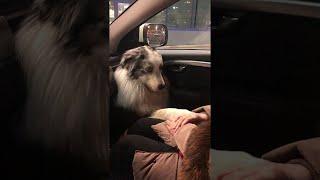 Doggo Wants to Hold Hands || ViralHog