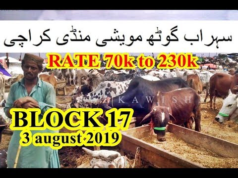 Repeat Korangi Dhai Number Bakra Mandi Video 2019 || Livestock