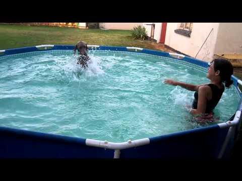 Nikita the funny Weimaraner dog pool fun
