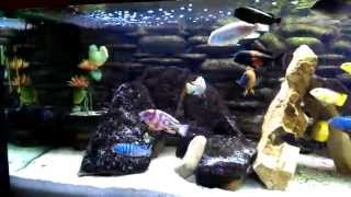 Malawi Fish Tank Aquarium Diy 3d Background 575l -
