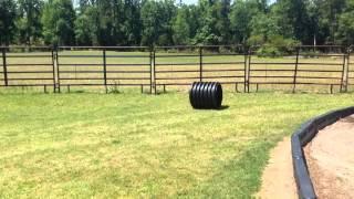 5/17/2014 Lazy O Farm Smithfield, NC (1)