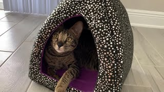 Cute Cat Loves Her Halloween Bed And Toys #halloween #cat #cute
