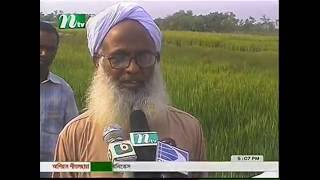 Saline tolerant winter rice cultivation at costal area under CBA project of CNRS 2012 ntv News
