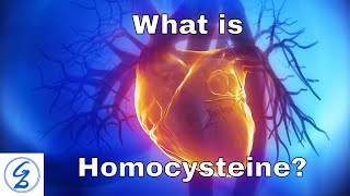 What is Homocysteine?