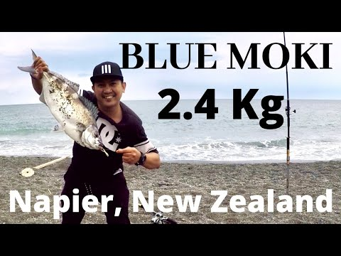 Mission Accomplished|| Fishing A Blue Moki || Surfcasting || Mussel Bait