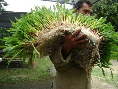 forraje verde hidroponico argentina warez