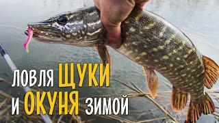 Ловля щуки и окуня на спиннинг зимой. Рыбалка на старике Десны в окрестностях Киева.