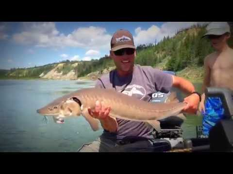 Sturgeon Fishing On The North Saskatchewan River